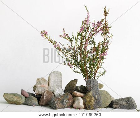 young plant growing from stones on white background
