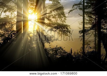 View from wood with contreyour sun rays and trees