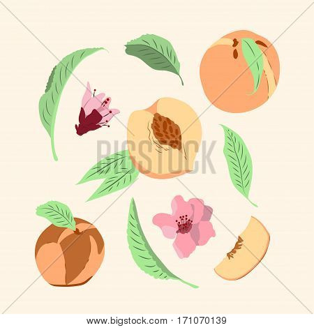 Vector illustration. Set with peaches and leaves