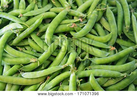 background from many ripe green pea pods