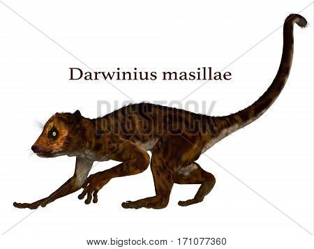 Darwinius Primate with Font 3d illustration - Darwinius is lemur-like early primate that lived in the Eocene Period in Germany.