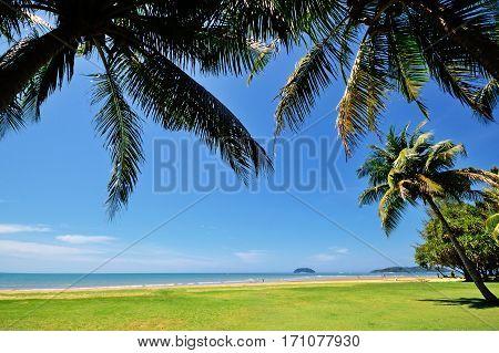 Summer Background, Coconut Palm Tree Against Blue Sky In Tanjung Aru Beach, Kota Kinabalu, Sabah Bor