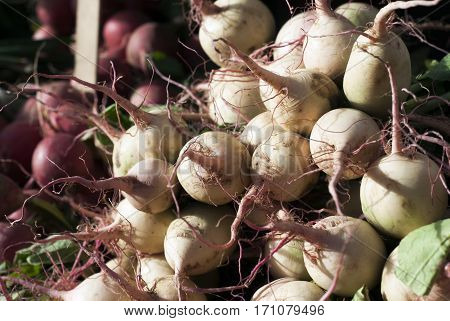 Freshly harvested turnips sit on display at a farmer's market.