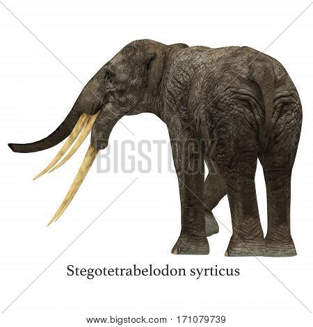 Stegotetrabelodon Elephant with Font 3d illustration - Stegotetrabelodon was an elephant that lived in the Miocene and Pliocene Periods of Africa and Eurasia.