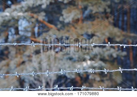 Closeup Of Barbed Wire In Winter.