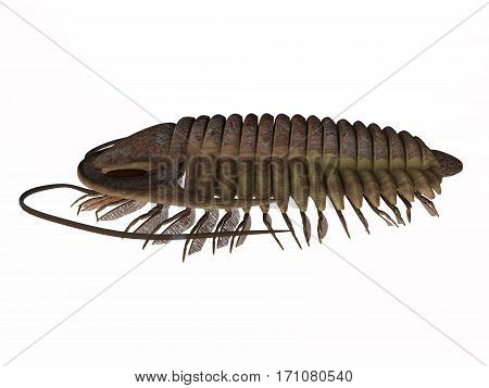 Trilobite ptychoparia Side Profile 3d illustration - Trilobite ptychoparia animal lived in the Cambrian seas of Eurasia and North America. poster