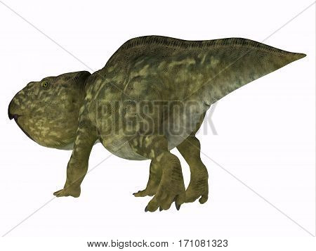 Udanoceratops Dinosaur Tail 3d illustration - Udanoceratops was a Ceratopsian herbivorous dinosaur that lived in Mongolia in the Cretaceous Period.