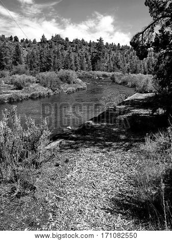 The beautiful Deschutes River winds a through the woods alongside a nature trail near the town of Tumalo Oregon on a nice summer day.