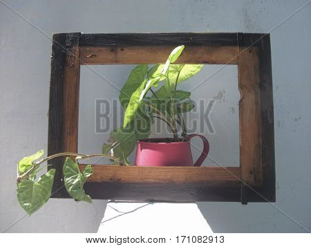 Escaping from the picture: flowered plant in pot inside a wooden frame simulating a painting that is alive