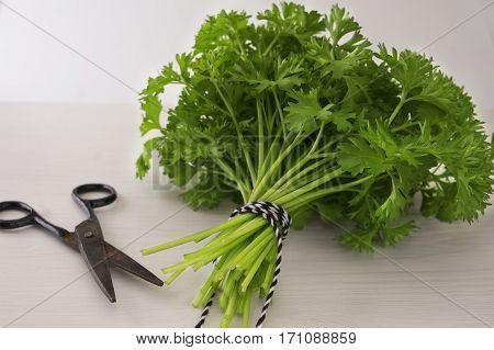 Bunch of green coriander on a wooden background