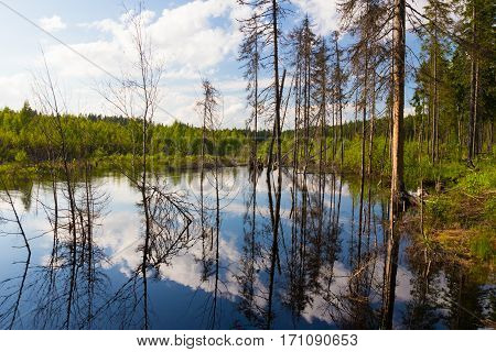 Northen lake with reflection of the clouds