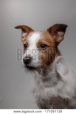 Portrait Of A Dog In Studio, Emotion
