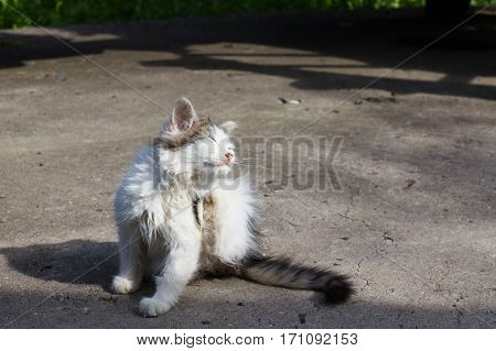 kitten sitting on the pavement and squinting at the sun
