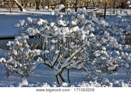 Winter city landscape. Snow on the trees.