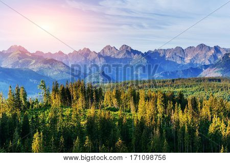 Fantastic sunset in the mountains of Ukraine. Good lighting tree with sunlight in summer day. Mountains in the fog.
