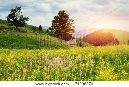 Fantastic sunset in the mountains of Ukraine. House summer. Summer field meadow flowers.