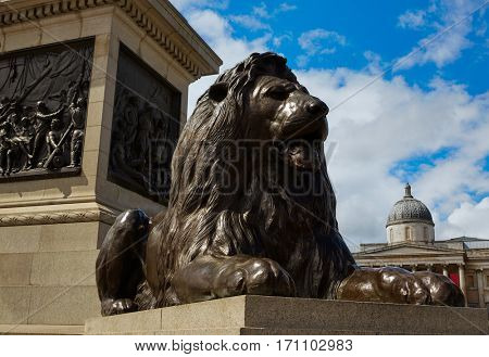 London Trafalgar Square Lion in UK england
