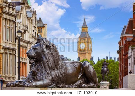London Trafalgar Square Lion in UK england