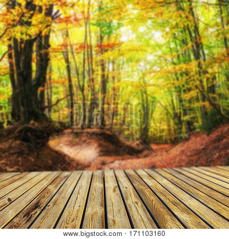 Forest Road in the autumn. Autumn Landscape. Natural blurred background. Soft light effect.