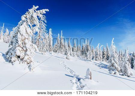 Fantastic winter landscape, steps, something leading into the mountains. Carpathian Ukraine Europe