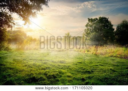 Clearing in the forest in sunny summer morning