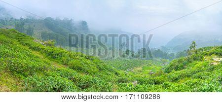 The Foggy Mountains