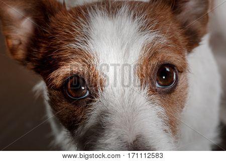 Dog Cute Look Nice And Cute