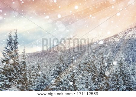 magical winter landscape, background with some soft highlights and snow flakes. Dramatic wintry scene. Carpathian, Ukraine, Europe.
