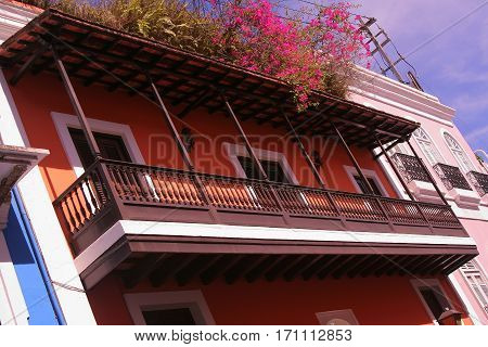 Overflowing rooftop garden in sunny Old San Juan