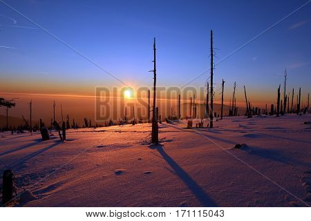 Winter forest destroyed by bark beetles during the sunset