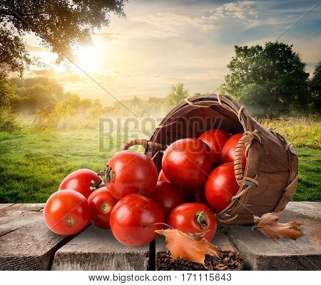 Tomatoes in a basket on table and landscape