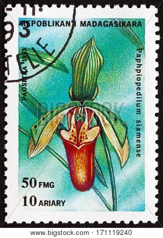 MALAGASY - CIRCA 1993: a stamp printed in Malagasy Madagascar shows Venus slipper paphiopedilum siamense orchid circa 1993