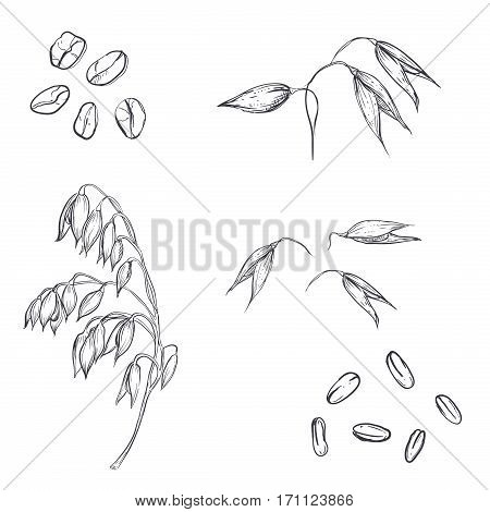 hand drawn set of oats, oatmeal, oat grain. sketch. Vector eps 8