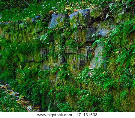 Old stone wall with green moss and plants