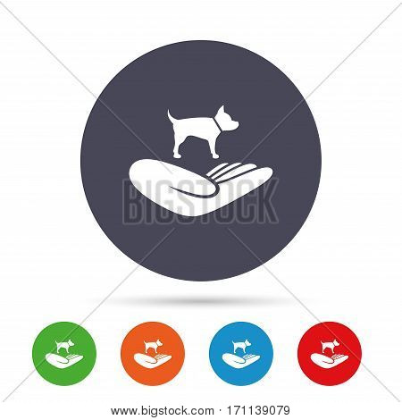 Shelter pets sign icon. Hand holds dog symbol. Animal protection. Round colourful buttons with flat icons. Vector