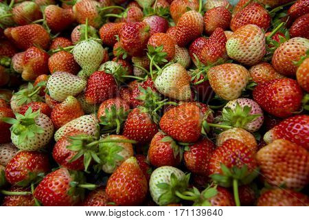 Fresh Strawberry Background,fresh Ripe Strawberries Close-up.
