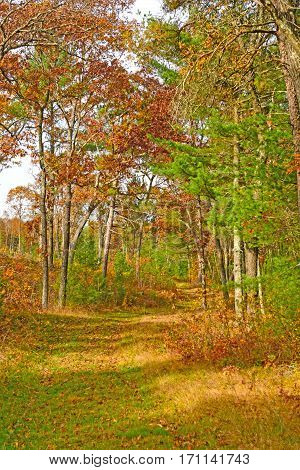Fall Colors on a Forest Trail in Black River State Forest In Wisconsin
