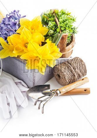 Spring flowers with garden tools. Isolated on white background