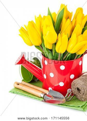 Spring flowers tulip with garden tools. Isolated on white background