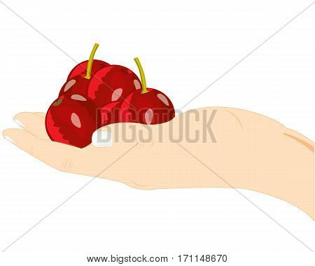 Ripe berries cherry on palm of the person