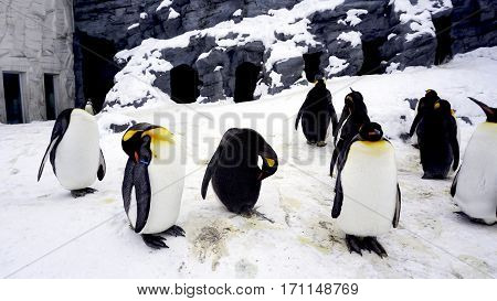 Penquin Animal Stand And Sleep In Winter Snow