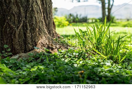 Focus on green grass clump closeup next to tree