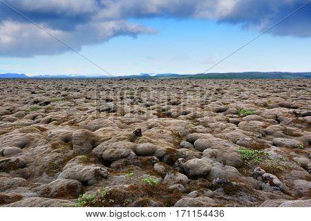Moss field in Iceland, Europe.