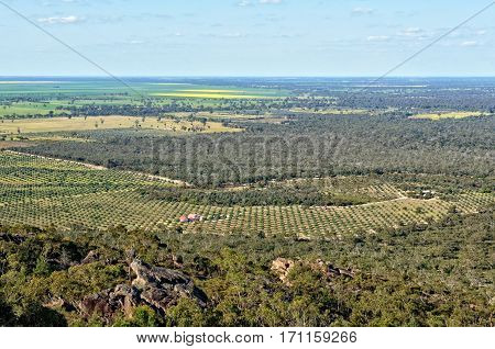 View of an olive grove and blooming canola  from the Mount Zero Lookout in the Grampians, Victoria, Australia