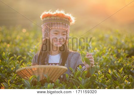 Kid and Little hill tribe farmer standing in Green tea field in shui fong Chiang rai near Angkhang Chiang mai Thailand
