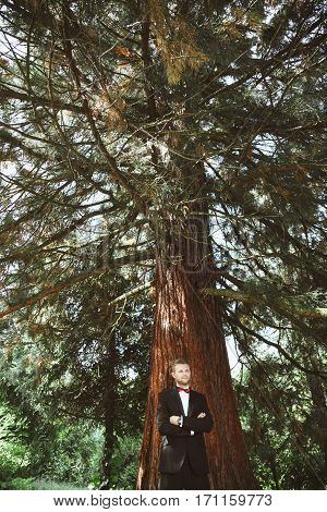 Wedding photo shooting. Bridegroom standing under tree. Wearing white shirt, vinous bow-knot and black jacket. Outdoor