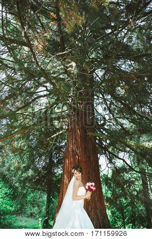 Wedding photo shooting. Bride standing in pine forest with bouquet. Looking down. Wearing white dress and veil. Outdoor