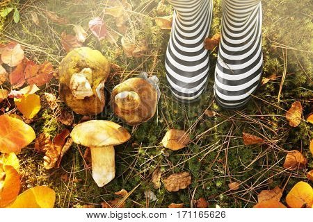 Rubber boots and mushrooms in forest