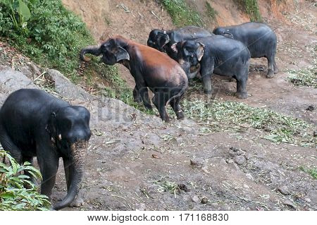 Herd Of Elephants Going For A Walk In The Jungle