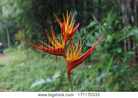 red flower exotic vegetation wet after the rain in the jungle